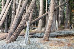 near the Fallen Leaf Lake shoreline (Kass & Rachel) Tags: trees lake snow forest leaf rocks pebble fallen highkey hdr pp tahe