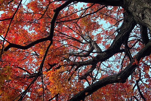 Fall_Leaves_5