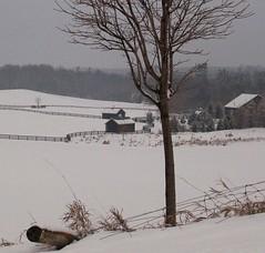 Winter Solitude (northerner2) Tags: ranch winter horses snow december fences treeline northernontario