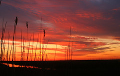 Brigantine Sunrise (William  Dalton) Tags: sky sunrise reeds brigantine colorfulsky impressedbeauty diamondclassphotographer brigantinesunrise reedsinsunrise