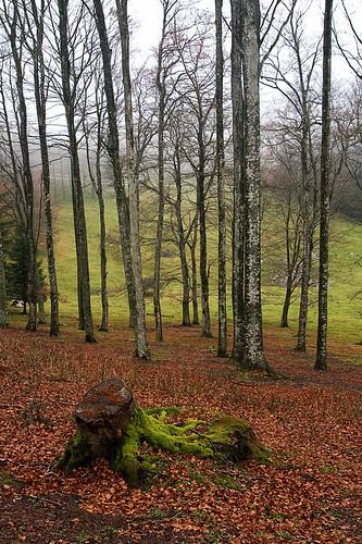 """Dentro del Bosque.....""""dedicadas a Blorrio"""" 2248589286_314a3b80ed"""