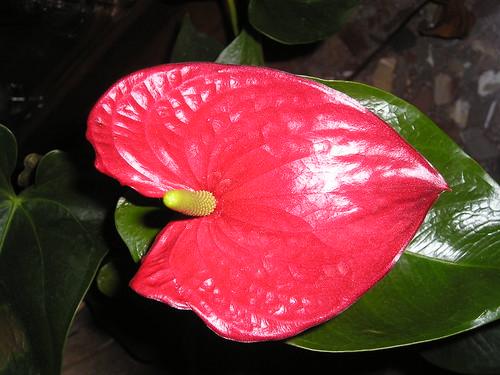 horizontal roja