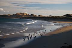 Fraserburgh (calumdonald) Tags: lighting blue light sea sun white holiday black beach water birds contrast scotland wildlife