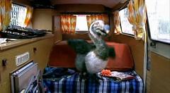 06 Dodo the aerobic birdie