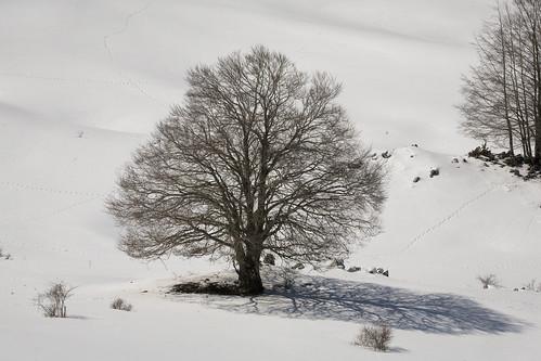 Neve a Camposecco