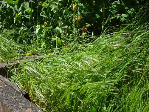 Un bout d'herbes-4