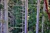 Ghosts (fewstingscorpio) Tags: camping trees nature branches deceptionpassbridge deceptionpassstatepark washington whidbeyisland filteredlight 1 175 usa pines evergreentrees