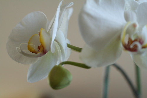 Orchids: Choreographic Flare