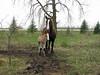 New Beginnings (Roofer 1) Tags: belgian colt workhorse foal