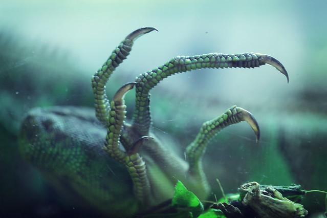 Part of big lizard