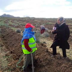 Almadanya plante un million d'arbres en Tunisie