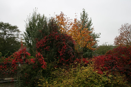 Autumn Tree Display