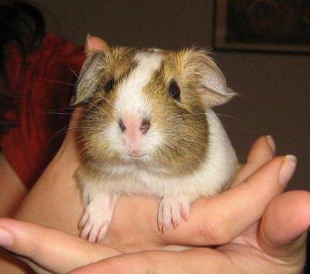 A tiny baby Fozzie.