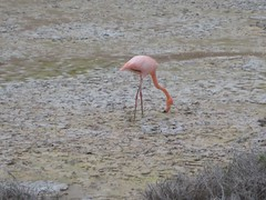 Flamingo on way to tortoise center