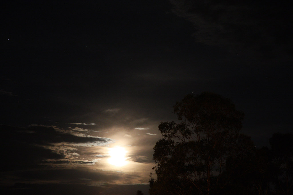 Moonrise and Eucalypt