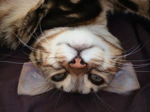 Baby kitty posing