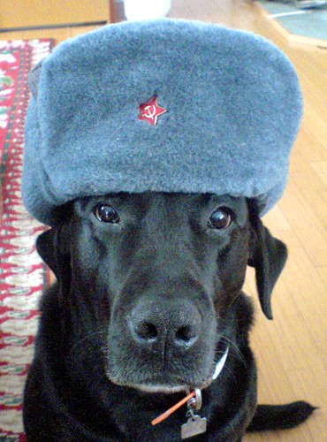 Comrade Winnie