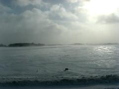 IMG_4356.jpg (mixedpaint) Tags: ontario winterstorm