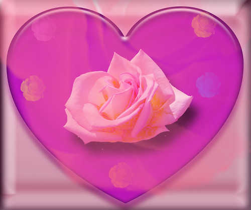 LOVE IS A LOVELY PINK ROSE