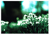 Snowdrop (ludwig van standard lamp) Tags: xpro experimental creativecommons hack zenit11 crossprocesed