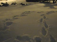 Mes pas dans la neige (!MimosaMicheMichelle!) Tags: park winter snow night bench evening hiver neige soir 2008 nuit parc banc canons3is mimosamichemichelle michellebchardlalonde parcmercille img3962mf montrgie saintlambert rivesudsouthshore canada qubec saintlambertlevillage saintlambertgreen saintlambertnotredame saintlambertmercille saintlamberthooper