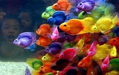 Peces y arcoiris (Trebole) Tags: arcoiris rainbow flickr fantasia hadas magia treboles abigfave pecesmar