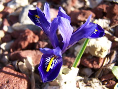 Equinox Iris
