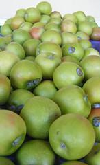 Abundance of Green Apples