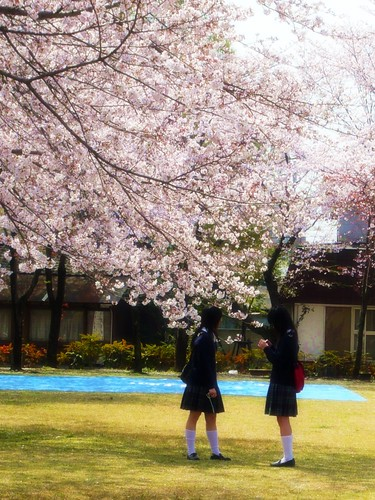 櫻花盛開的感恩季節_水前寺成趣園