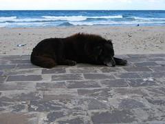 Alone (RoBeRtO!!!) Tags: sea dog black beach water animal cane sand mare alone wave solo acqua nero spiaggia animale sabbia rdpic canong7