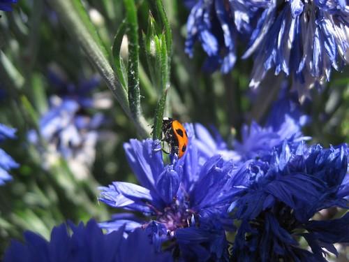 Ladybugs were everywhere