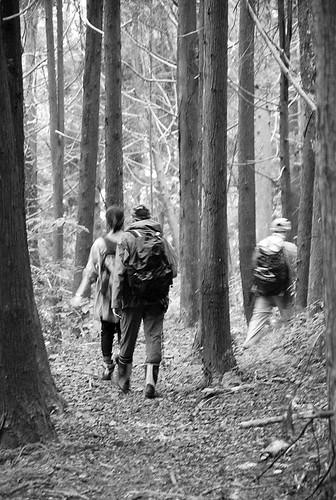 漫步在杉林中