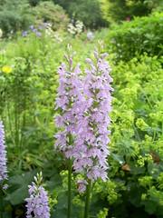 S5031580 (Ian Faz) Tags: flowers plants tress nessgardens