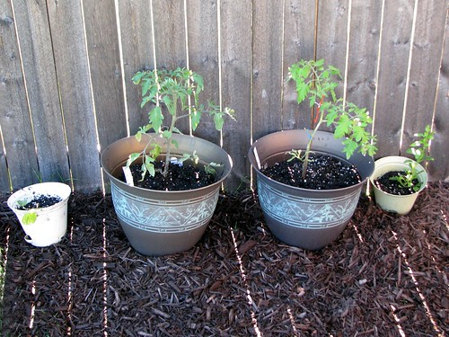 Tips for people who want to start growing their own vegetables