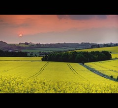 Big Golden Sunrise in the Cotswolds (Martyn.Smith. Back from Euro tour :)) Tags: morning trees england sun yellow clouds sunrise canon landscape eos dawn early flickr cymru harvest meadow cotswolds fields goldenvalley canola rapeseed copse photomatix rapeseedfields 450d platinumheartaward seedoil mygearandme mygearandmepremium mygearandmebronze mygearandmesilver mygearandmegold mygearandmeplatinum mygearandmediamond seedoilrape cotswoldharvest