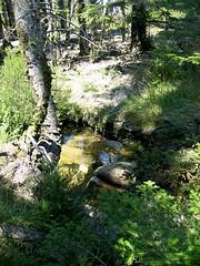 Ruisselets et mares de la plaine d'Uovacce