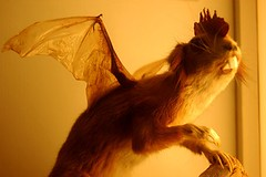 Squirrel with Bat Wings, in the Folklore section (detail) (Curious Expeditions) Tags: sterreich salzburg animal museum puppy austria naturalhistory naturalhistorymuseum freaks grafted deformed cryptozoology hausdernatur houseofnature curiousexpeditions