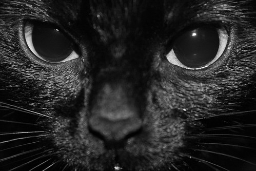 Você também não vê o inferno no fundo desses olhos?