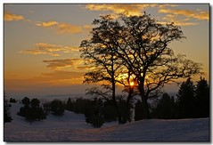 December Sunset (2) (Roger Lynn) Tags: winter sunset snow tree moscow idaho golfcourse universityofidaho palouse karmapotd karmapotw aplusphoto