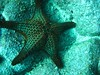 Floreana: Starfish