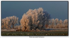 baumkleid (manfred-hartmann) Tags: leica winter germany landscape deutschland lumix frost feld felder kalt landschaft hartmann soe baum manfred fz50 niedersachsen unsernorden platinumphoto aplusphoto flickrdiamond theunforgettablepictures