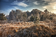 Winter Wonderland II (Philipp Klinger Photography) Tags: winter sky cloud tree grass illustration photoshop frost meadow conifer dcdead