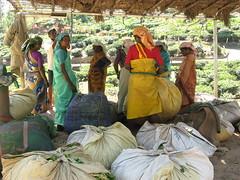 Tea Pickers waiting for the pick up van? (kartiksurbhi) Tags: kerala teaplantation munnar