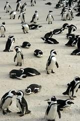A crowded beach...