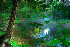 Summer Morning Light (Brian D. Tucker) Tags: forest riverwood photomatix supershot 1xp hdrsingleraw croweriver theperfectphotographer natureselegantshots explorewinnersoftheworld theenchantedcarousel