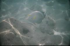 Hawaii 2008 (John Biehler) Tags: fish film underwater hanaumabay waterproofcamera 800iso hawaii2008