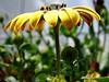 Natural Umbrella (RiCArdO JorGe FidALGo) Tags: flower portugal gardens sony sintra flor jardim paque dsch2 diamondclassphotographer fidalgo72 ricardofidalgo ricardofidalgoakafidalgo72