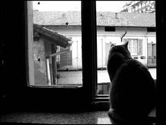 l'osservatore (•:• panti •:•) Tags: bw casa blackwhite tetti case bn finestra gatto biancoenero profilo contorno mieiocchi