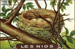les nids 3