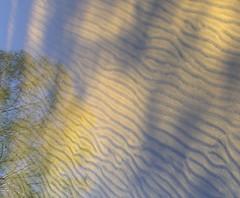 Narcisse (André-Guy Robert) Tags: tree robert water sand eau sable arbre imagepoetry creativephoto imagepoésie andreguyrobert andréguy